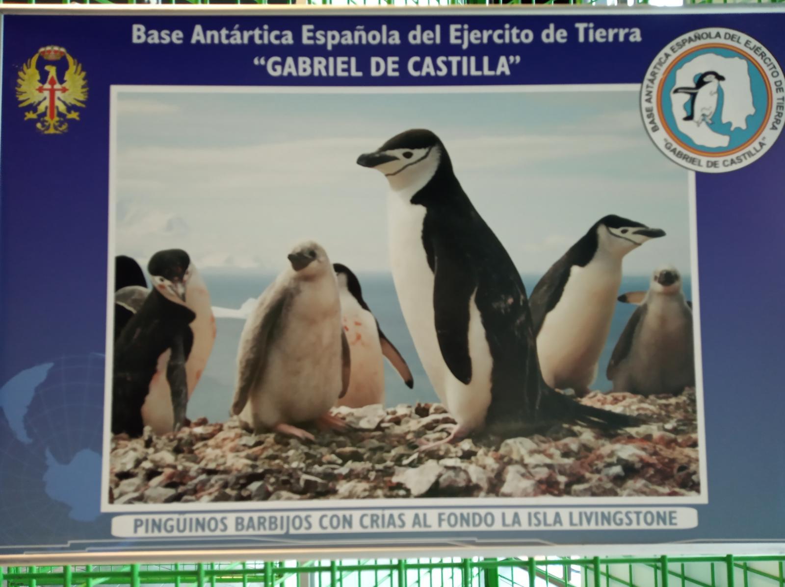 Antártida 7
