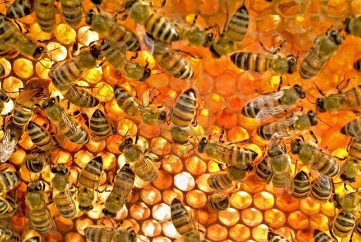 abejas y miel