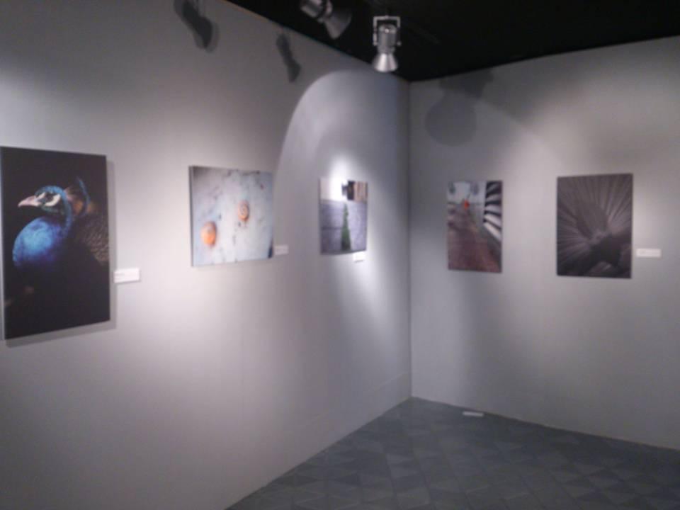Exposición sobre la naturaleza en la ciudad de Valladolid