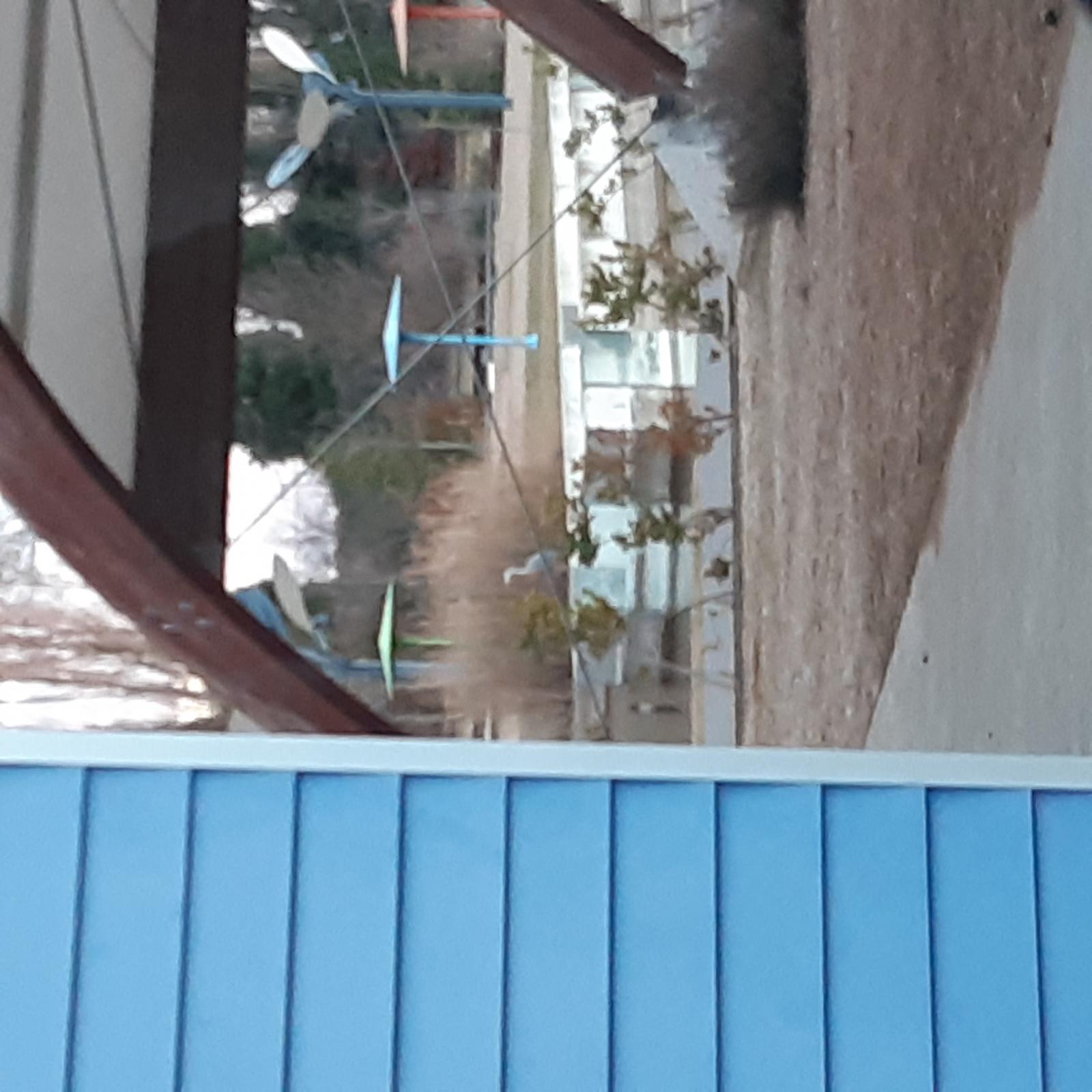 Garza en el Parque Ambiental del PRAE
