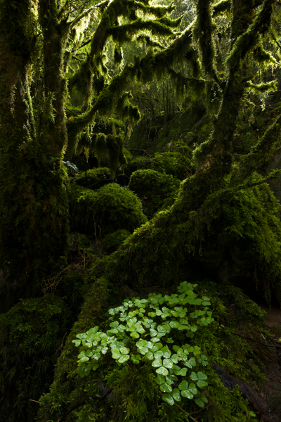 Fotógrafos de la Naturaleza 2014