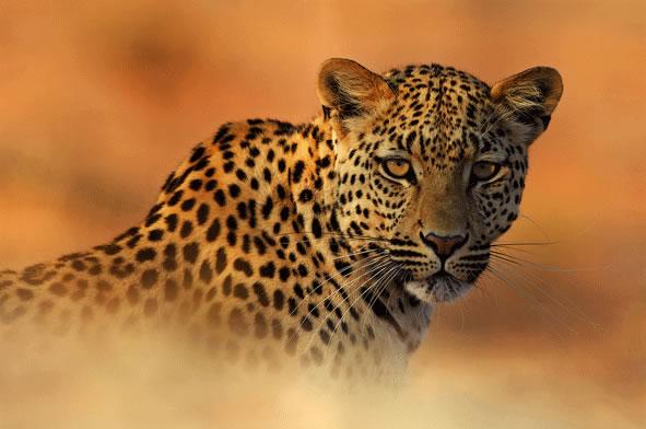 Ojos en el oasis (África del Sur) Autor Lee Slabber