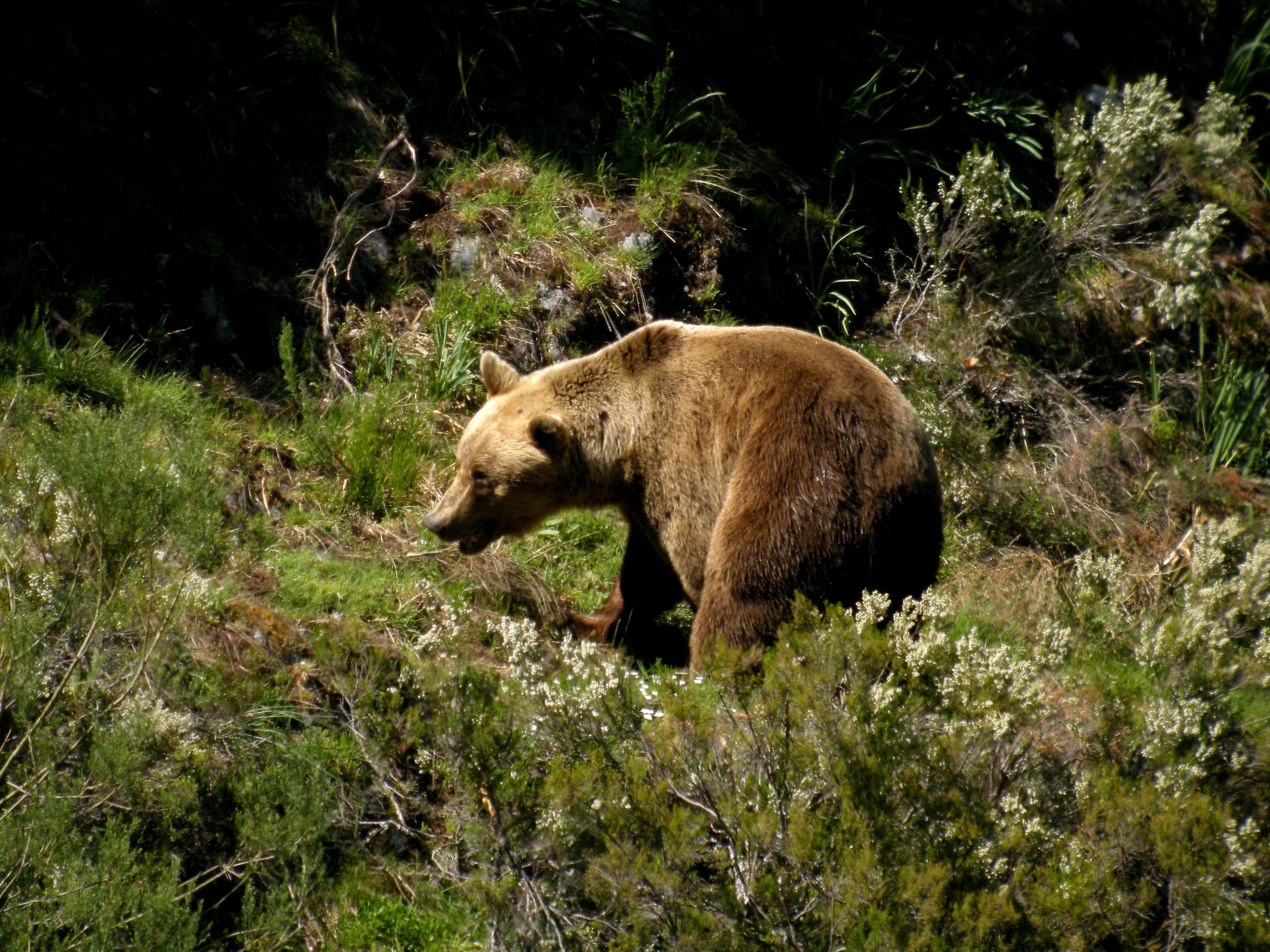 La vida secreta del oso