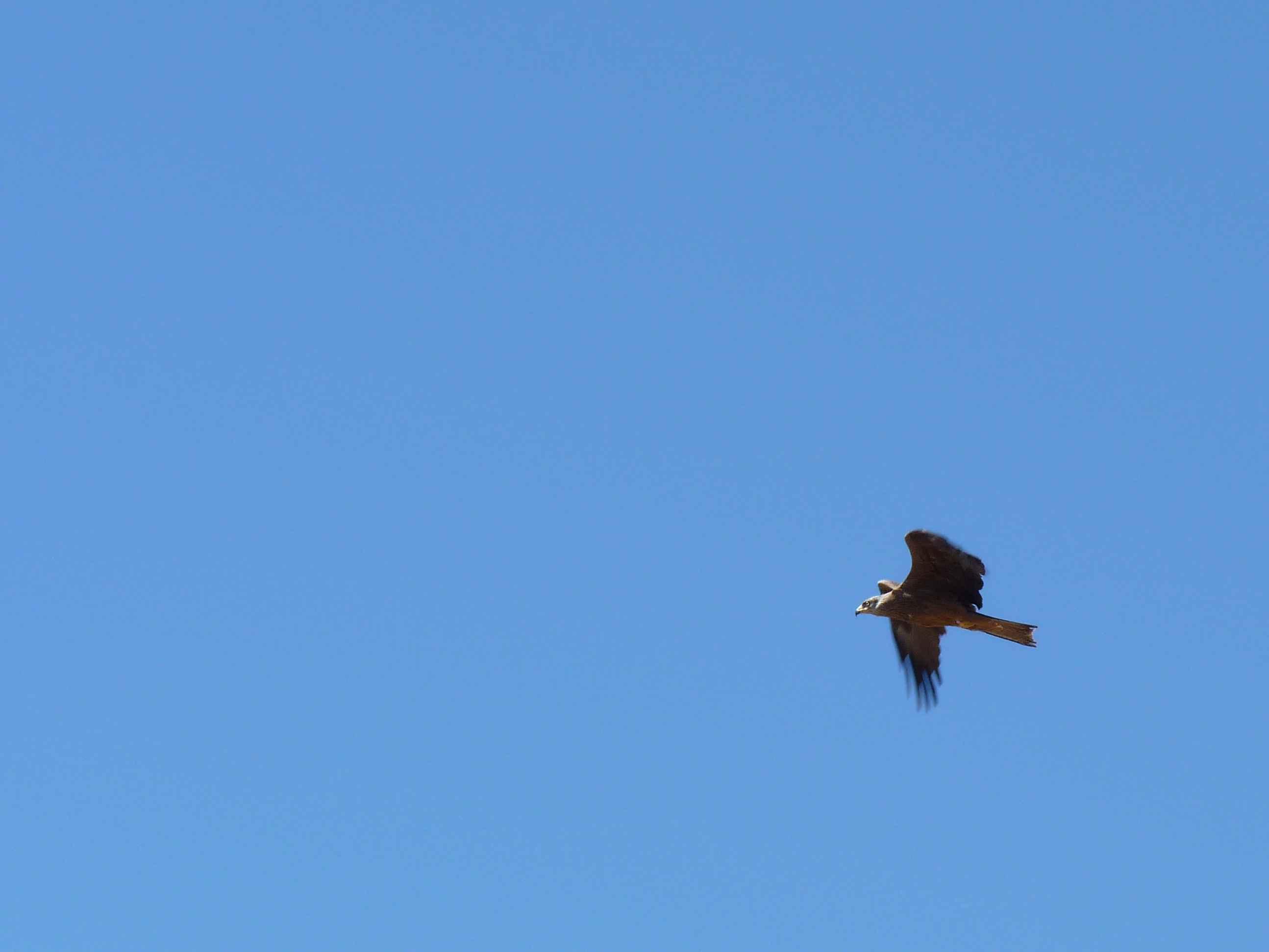 La observación de las aves en las Ornitorrutas