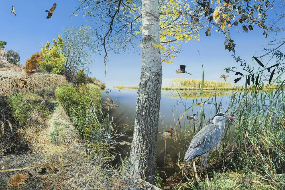Vida y diversidad: espacios naturales, espacios ilustrados: Reserva Natural Riberas de Castronuño (Valladolid)