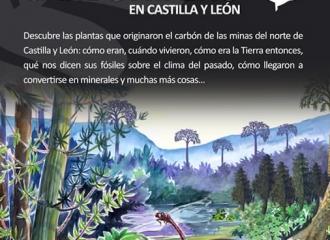 Fósiles Vegetales del Carbonífero en Castilla y León