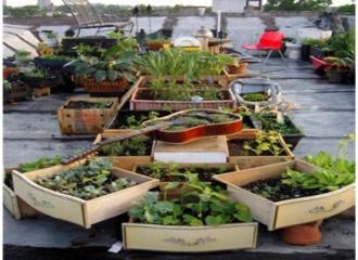Agricultura sostenible con una cultura diferente: permacultura